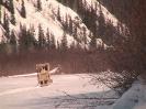 Moving fjord horses in Alaska_4